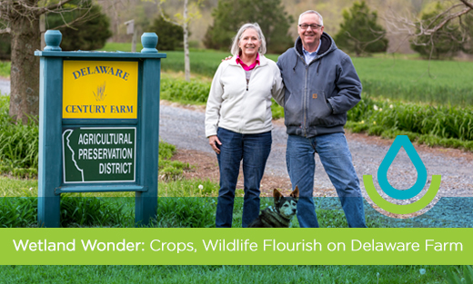 Delmarva farmers, Matt and Marilyn Spong, protect their wetland and the creatures that live there.