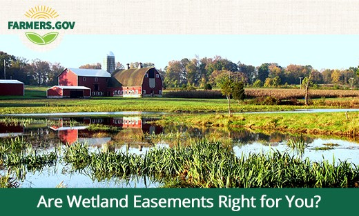 Are Wetland Easements Right for You?