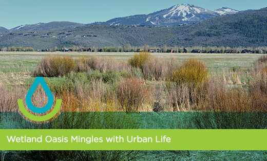 Wetland Oasis Mingles with Urban Life