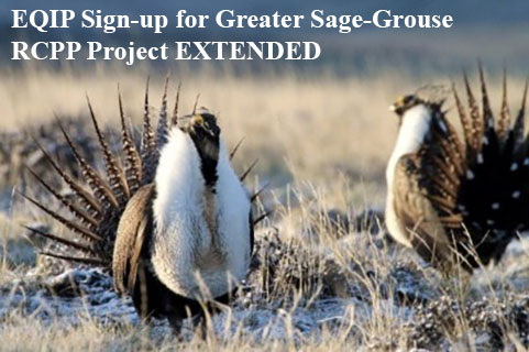 EQIP Sign up for Greater Sage Grouse RCPP Extended