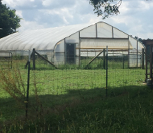 2.	A seasonal high tunnel installed on Cole- man's Paulding County farm.