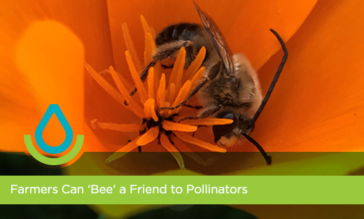 Farmers can 'bee' a friend to pollinators