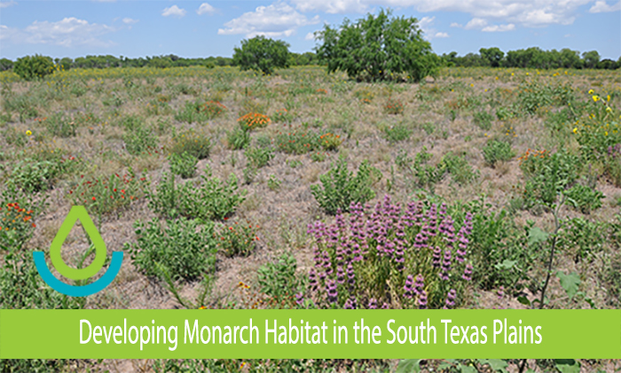 Banner image of Developing Monarch Habitat in the South Texas Plains, feature article showing the La Palomas site after successful establishment of pollinator plants.