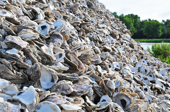 The NRCS EQIP oyster restoration program provided Bobby Leonard funding to help with his projects, which includes buying shell, buying spat on shell, working the ground, and harvesting the oysters.