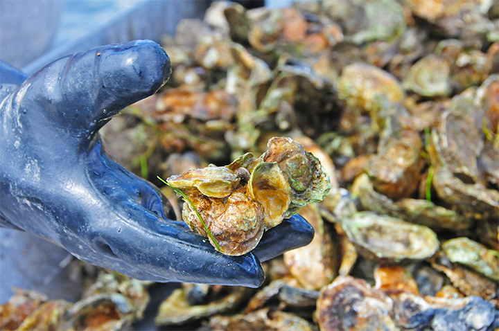 Maryland Natural Resources Conservation Service has partnered with watermen to restore about 380 acres of oyster habitat since first offering the program in 2012.