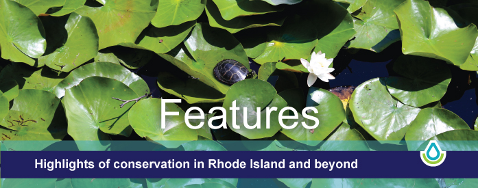 Features - highlights of conservation in Rhode Island and beyond.