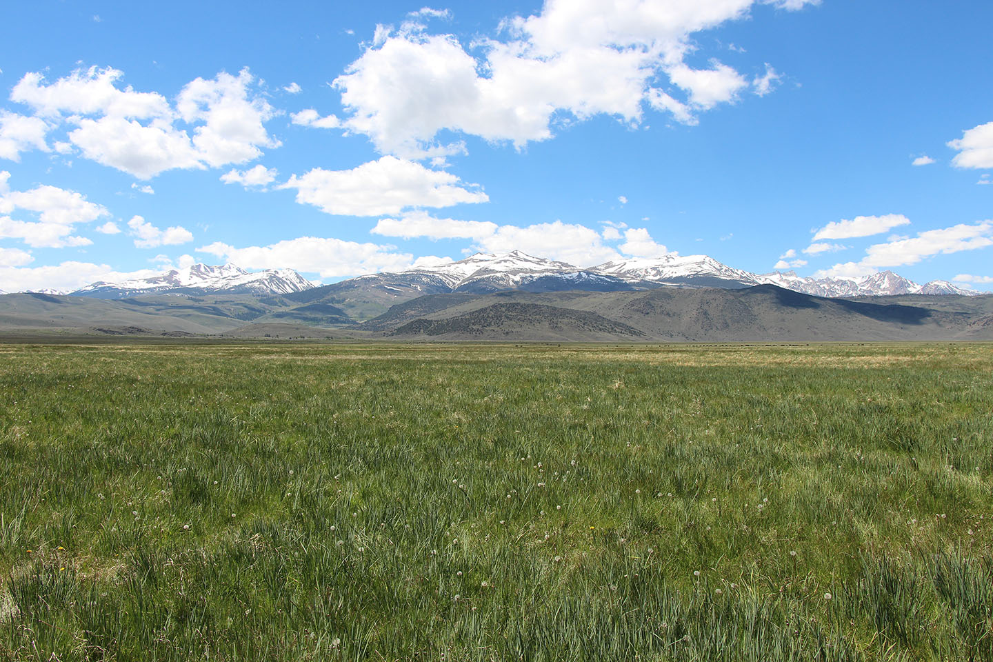 With beautiful mountains that reminded the Sceirines' grandfather of the Alps from his home country of Switzerland, wet meadows, quaking aspen stands and a beautiful sagebrush sea, the Sceirine Point Ranch provides a beautiful landscape