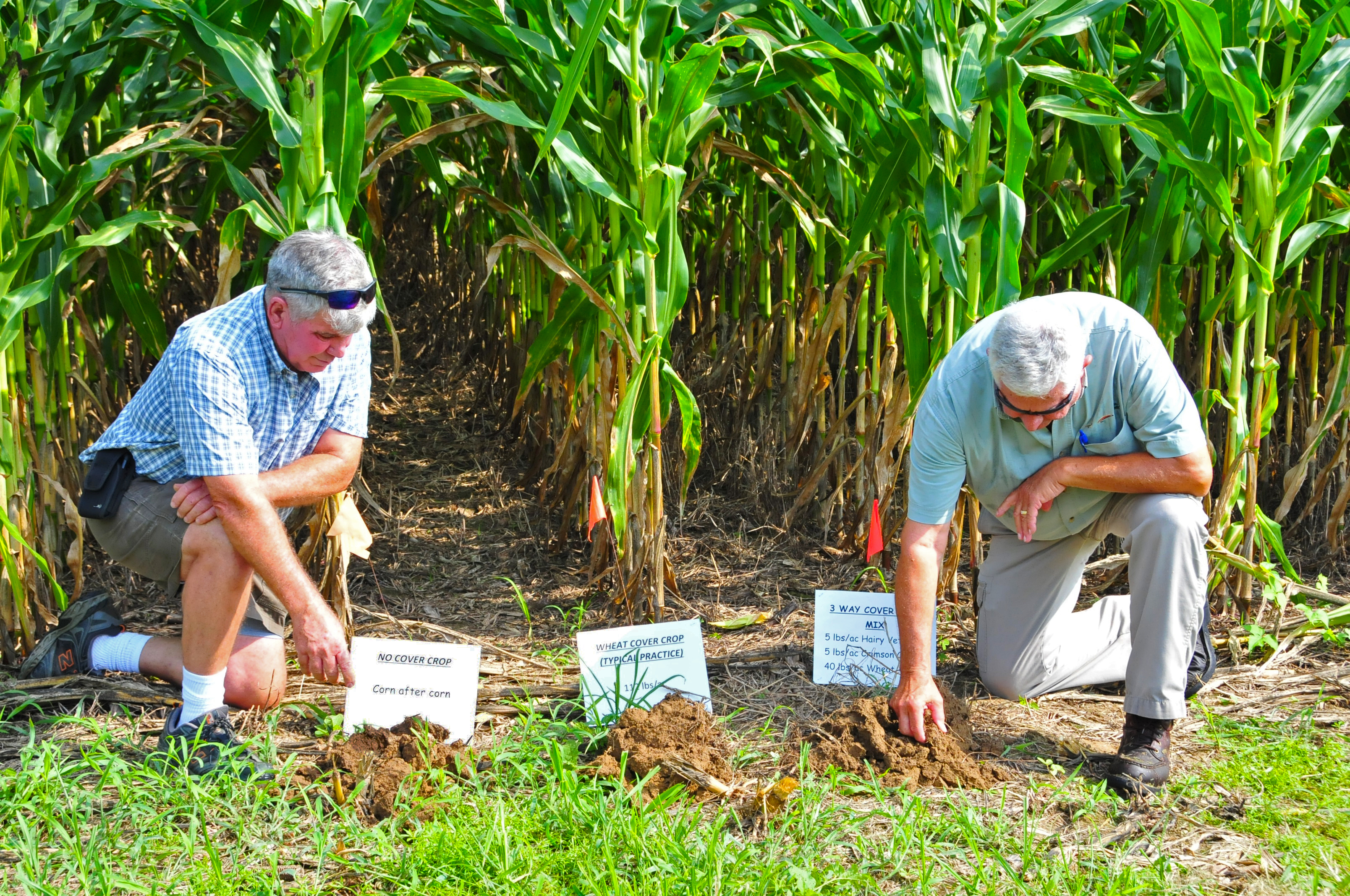 Lewis Smith's soil health trial consists of three segments of corn growth, with one area having no cover crop, the second portion having a single cover crop, and the third section having a three-way cover crop mix.