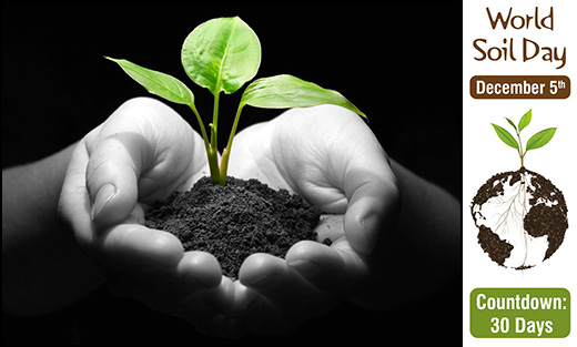 Photo of hands holding a seedling.