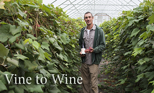 Seventeen years ago, Andy was a beginning farmer. Today, he and his wife have established themselves in a niche market that specifically serves cold climate grape growers in the northern United States.