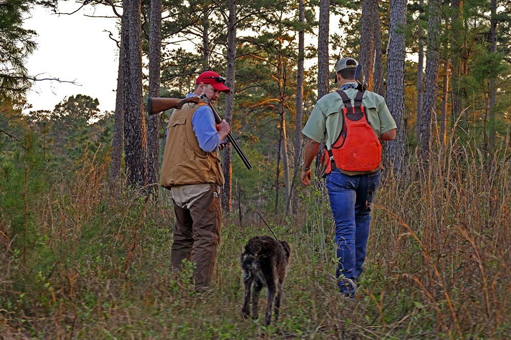 Dr. Theron Terhune and Joe Rice hunt for quail at Tall Timbers Research Station and Land Conservancy.