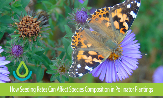 Banner image of a painted lady butterfly feeds on the flower of a New England Aster plant
