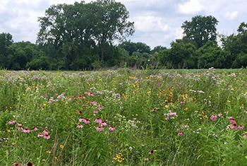 The demonstration plot in this photo shows species like pale purple coneflower, greyhead coneflower and horsemint.