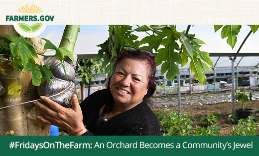 #FridaysOnTheFarm: An Orchard Becomes a Community's Jewel