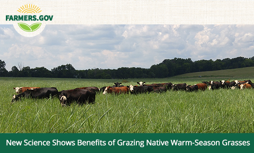 New Science Shows Benefits of Grazing Native Warm Season Grasses