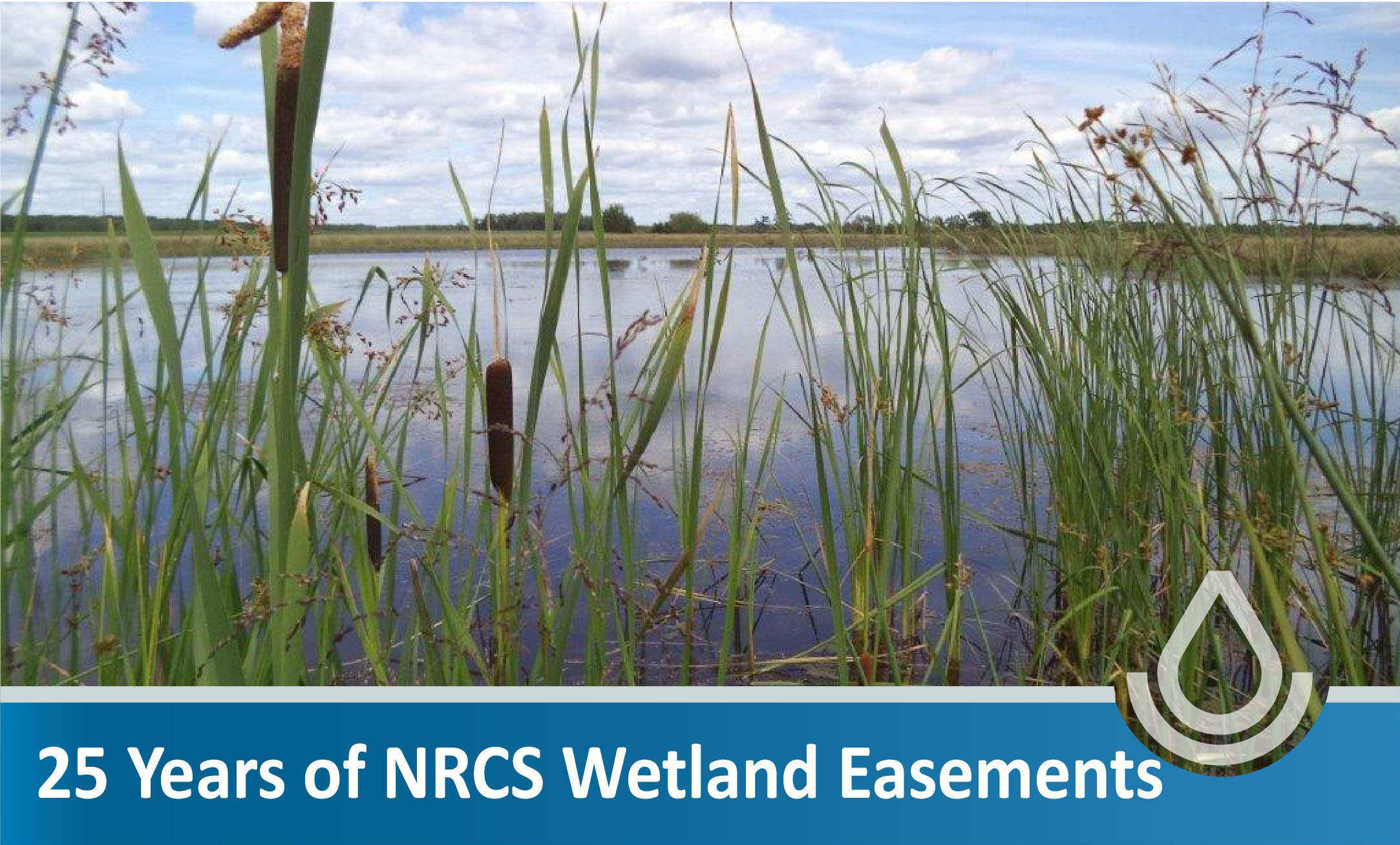 Over 25 Years of Wetland Restoration Success