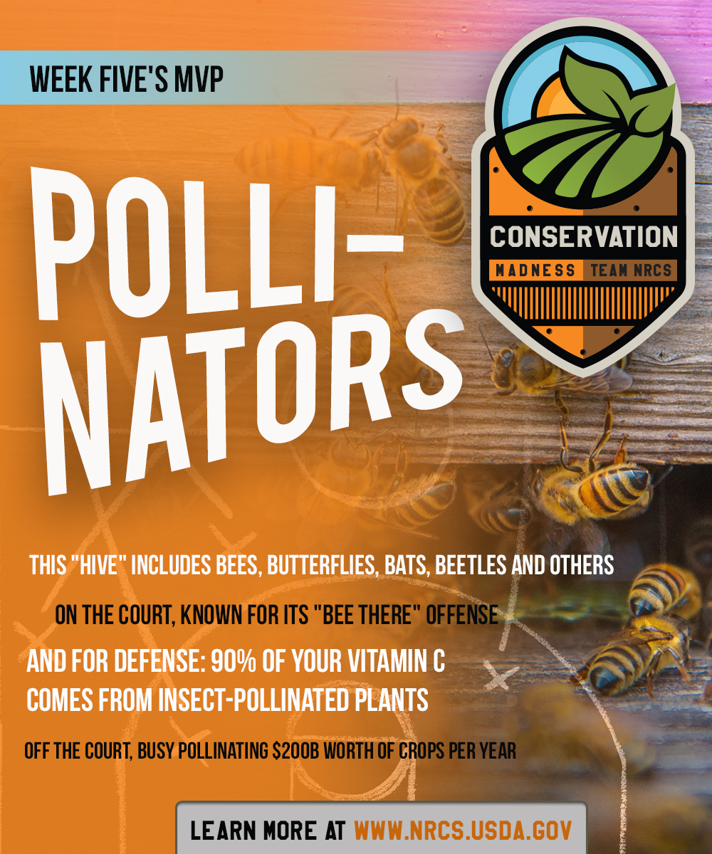 ConservationMadnessCards-POLLINATORS-19