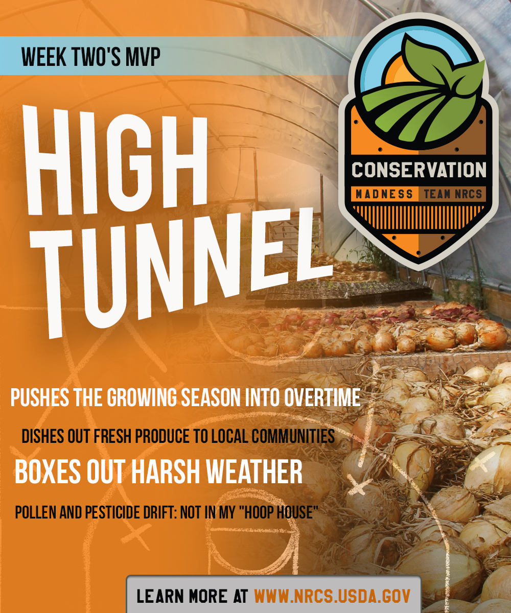 ConservationMadnessCards-HiTUNNEL-19