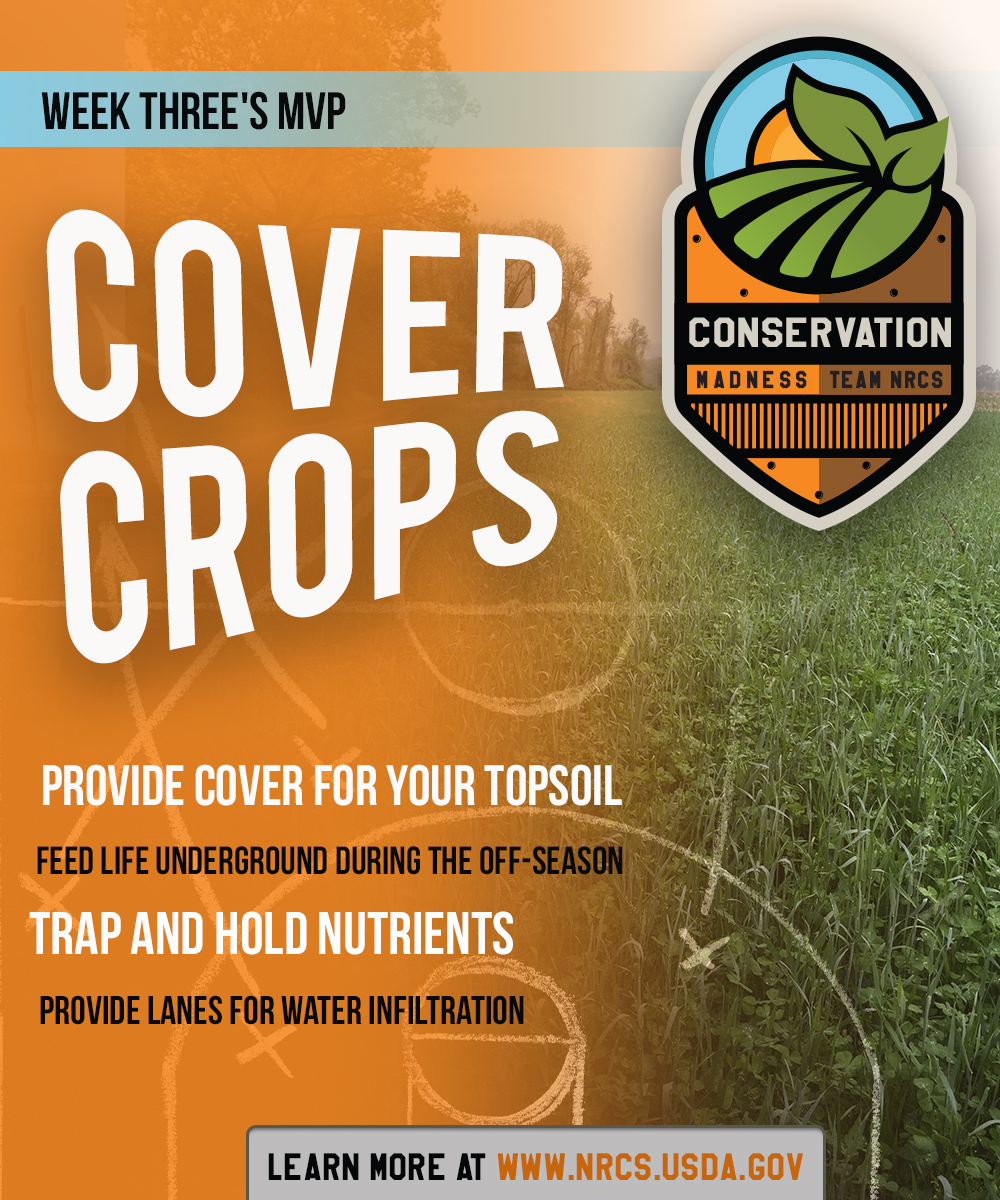 ConservationMadnessCards-COVERCROP-19