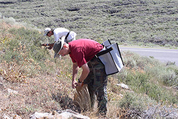 Image of two men collecting seed from native plants on rangeland