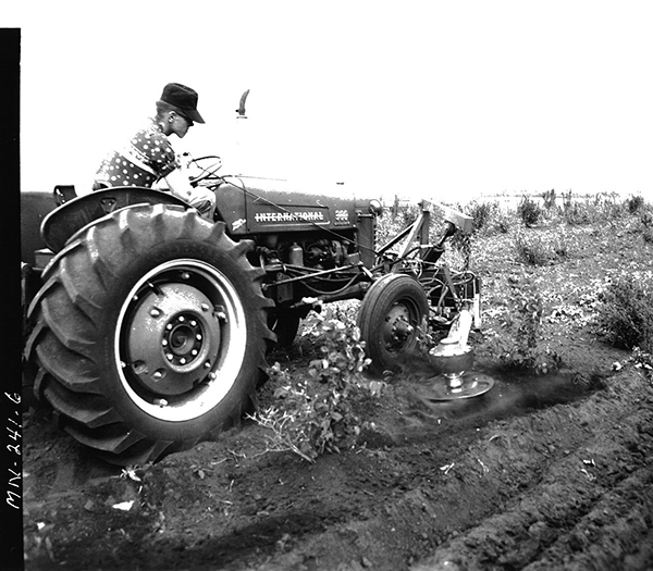 Image of a young man on a tractor using an In-the-row tree cultivator.