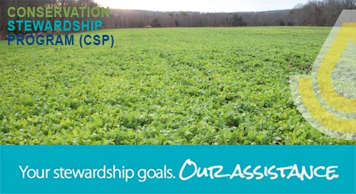 Your Stewardship Goals. Our Assistance. Image depicts cover crop.