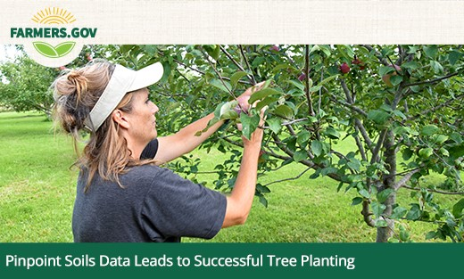 Pinpoint Soils Data Leads to Successful Tree Planting homepage