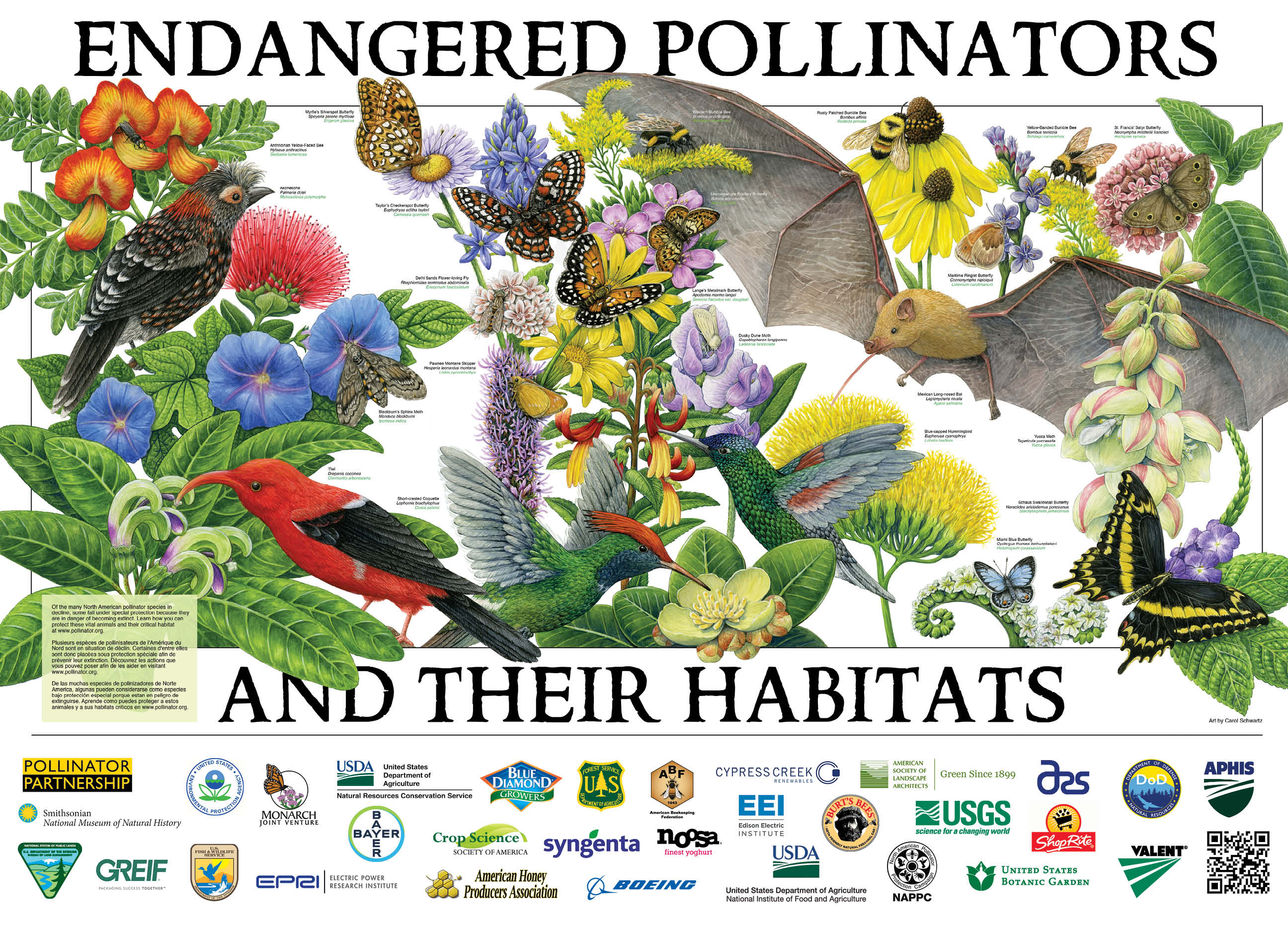 The 2019 pollinator poster features pollinator species that are at risk and listed as federally endangered or threatened.