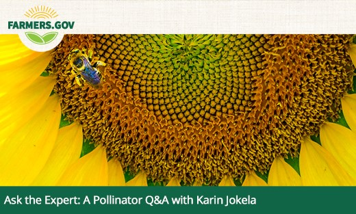 Ask the Expert Pollinator Q&A