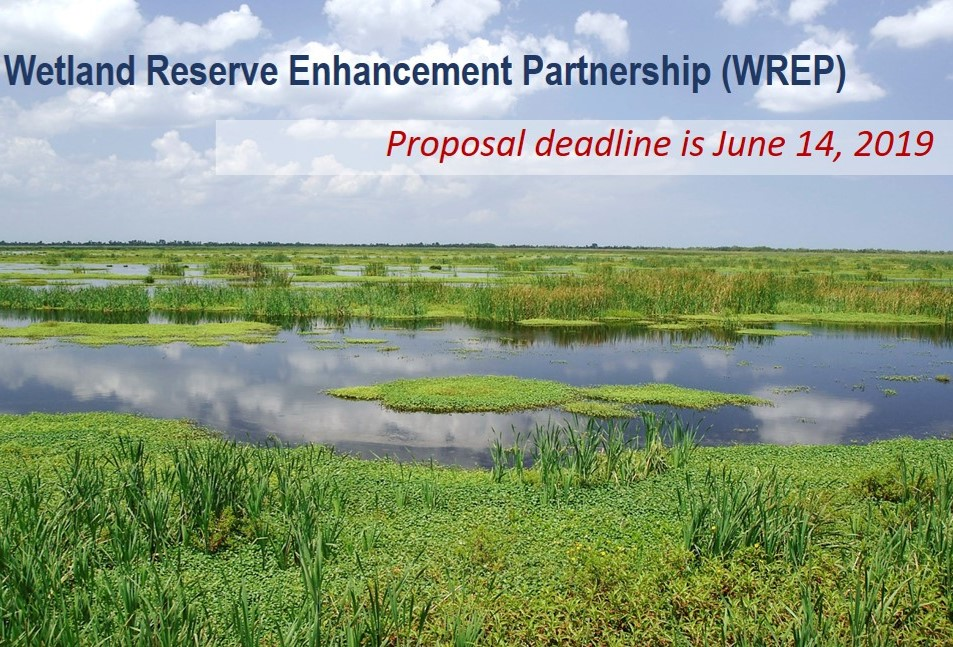 USDA Seeks Project Proposals to Protect and Restore Critical