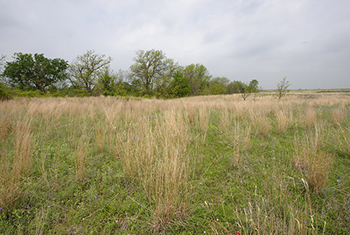 Image of a healthy pasture.