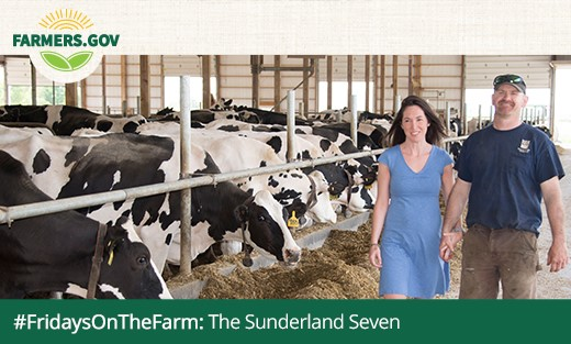 Sunderland Family image with Cows.