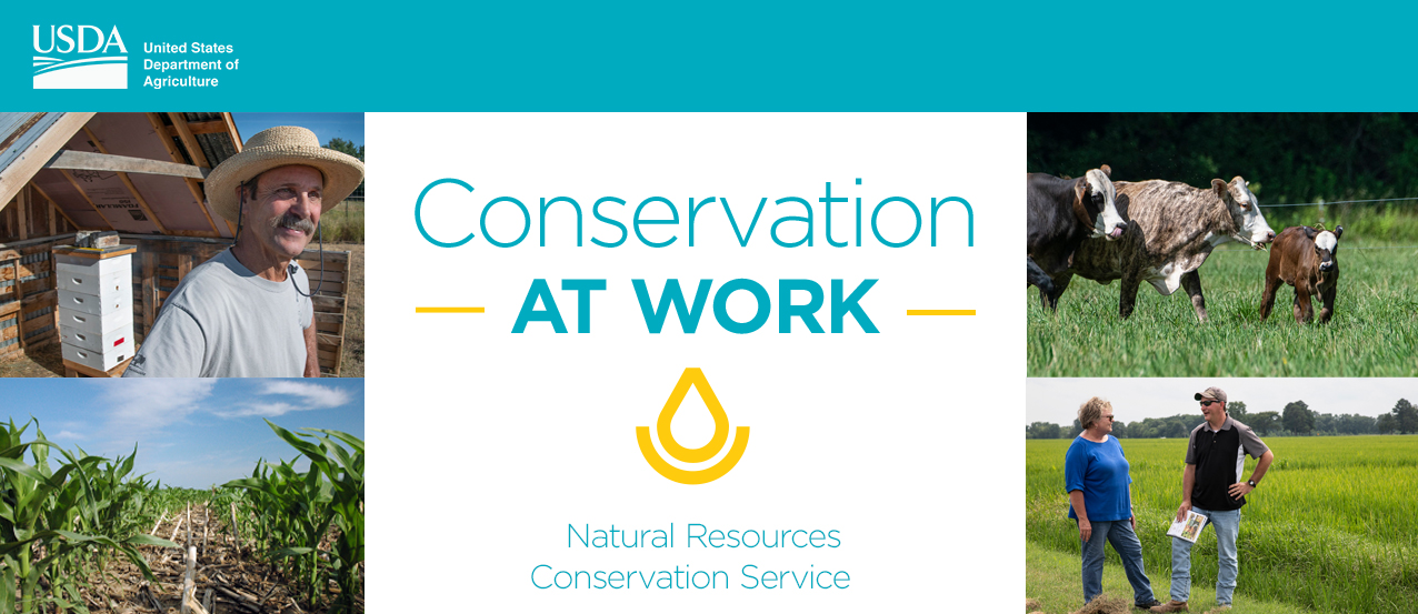 Conservation at work 2020