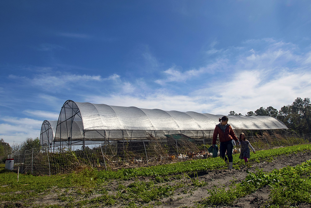 Amy Van Scoik and her daughter Coral, 5, walk past their high tunnels, where chickens eat pests and fertilize the ground before the next crop is planted.