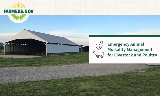 Emergency Animal Mortality Management for Poultry and Livestock