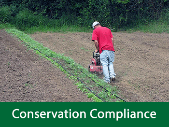 Conservation Compliance - photo of farmer tilling an organic pepper field in Puerto Rico.