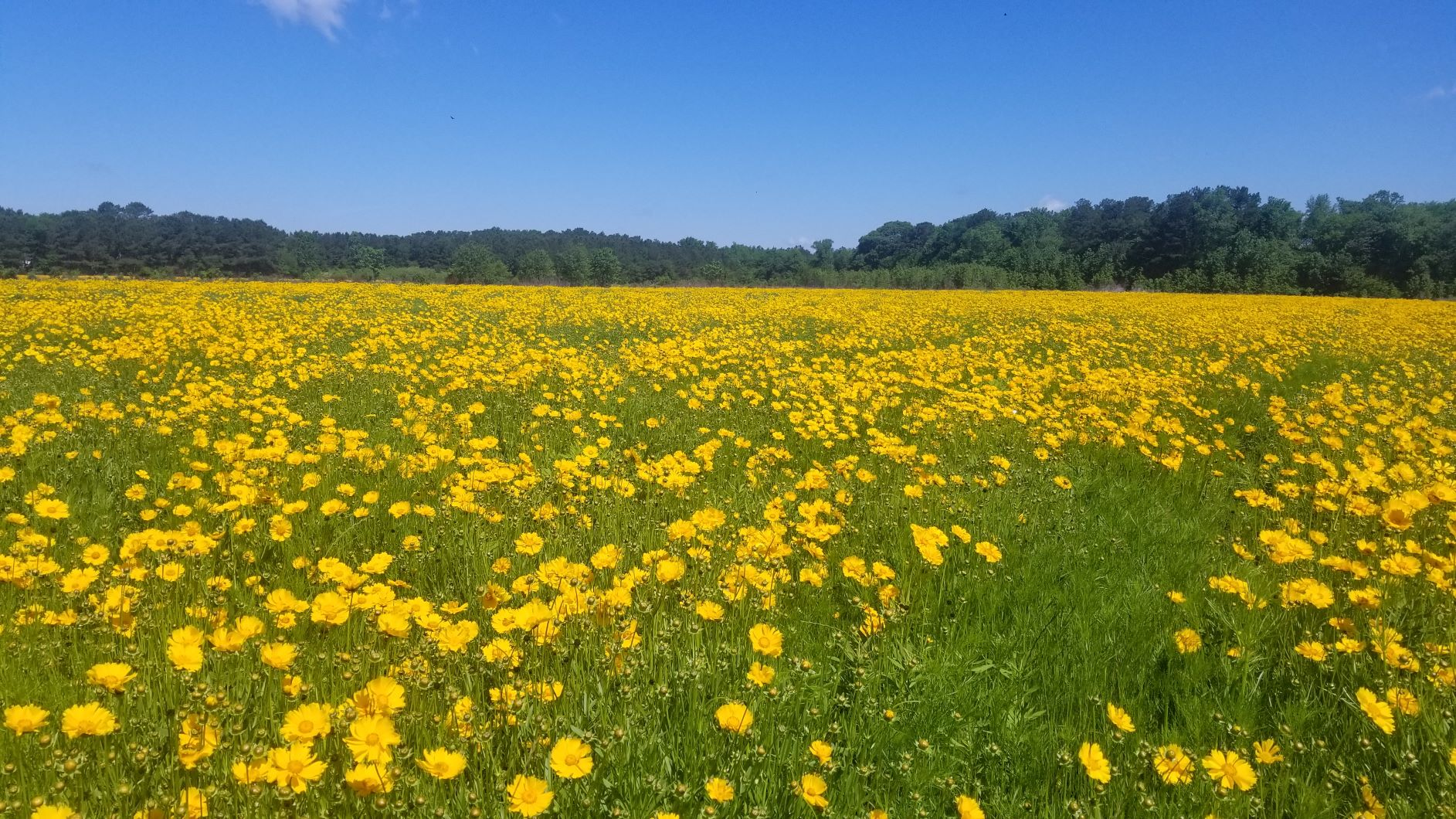 "Pollinator ""field of dreams"" on the Eastern Shore"
