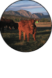 CEAP grazing special issue