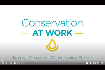 Conservation at Work videos