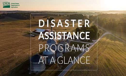 Disaster Assistance Programs at a Glance