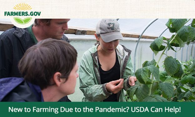 New to Farming Due to the Pandemic? USDA Can Help!