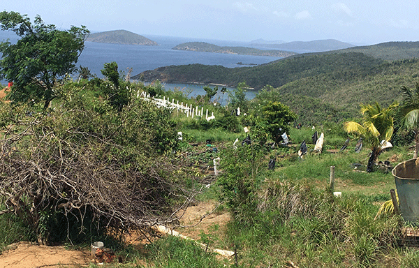 Farm in Estate Bordeaux looking east over the Northwest St. Thomas Watershed, USVI.