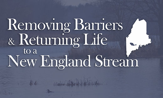 Removing Barriers and Returning Life to a New England Stream