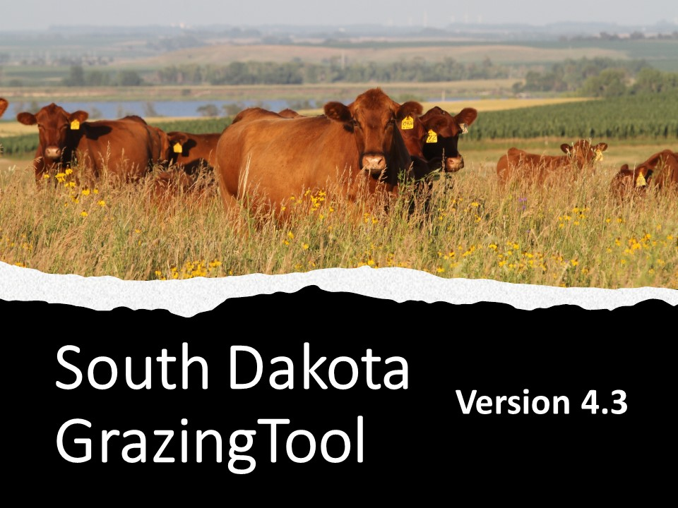 Cows in field grazing with text overlay of South Dakota Grazing Tool 4.3