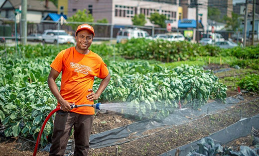 USDA Seeks Members for Advisory Committee on Urban Agriculture
