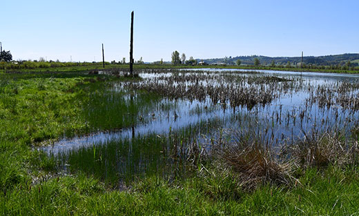 New USDA Projects Build on Efforts to Restore Lost Wetland Functions, Benefits on Agricultural Landscapes