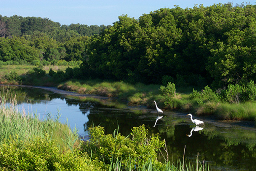 Help Save Delaware Wetlands with WREP