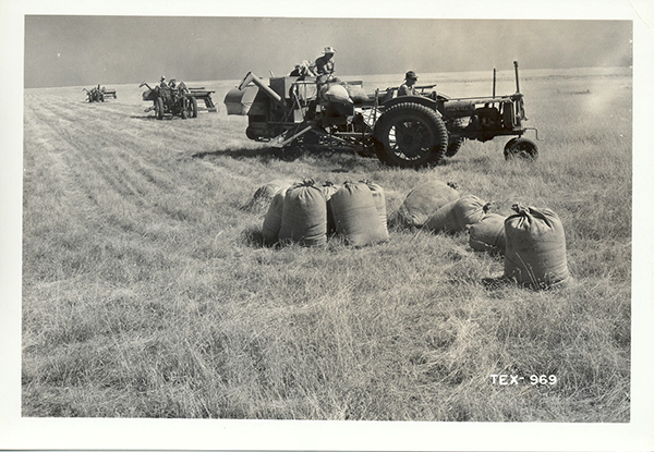 Blue grama grass seed being harvested from native grassland, 1941.