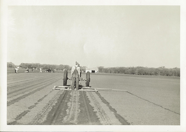 Marking rows for elm seed planting at the Manhattan SCS Nursery, spring 1937