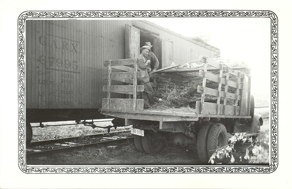 Crew packing refrigerated railcar with tree seedlings harvested from Manhattan SCS Nursrey, 1937.